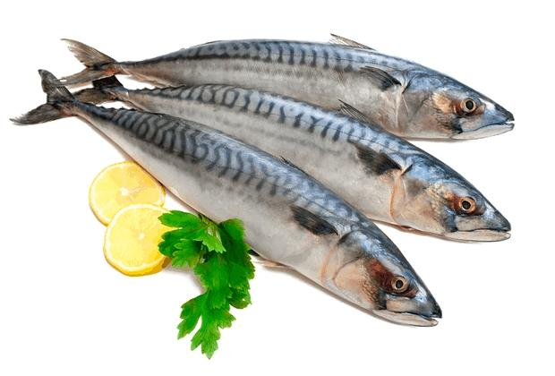 pesce-azzurro-sgombri