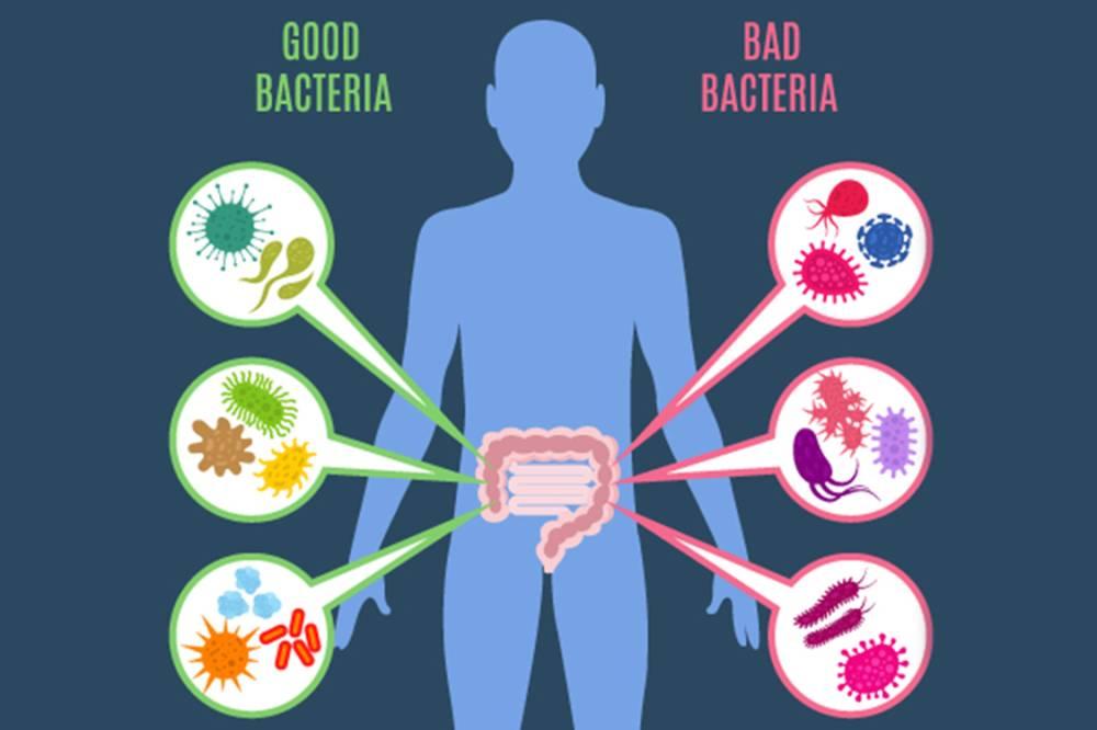 La chiave della salute è nell'intestino: il microbioma