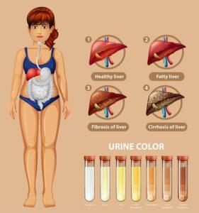 Malattie del fegato e microbioma: l'importanza di un intestino sano